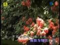 张瑶 - 明月光 (Yao Zhang)