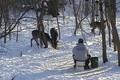The Deer Whisperer ONLY on HawgNSonsTV!
