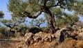 Griechenland - Der Garten der Goetter