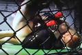 "Sean ""The Destroyer Loeffler"" MMA Fighting Clips"
