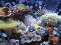 Red Sea Max