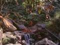 Adi Shankaracharya Movie1983 Sanskrit English Sub titles- Part 2