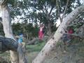Catalina girls tree climbing.avi