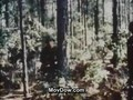 Vietnam War Project American History
