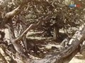 Vaterchen Frost- Abenteuer Im Zauberwald
