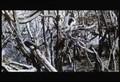 DerWundervogel-Semurg(1972)