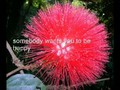 The Most Amazing Beautiful Strange Flowers in the World