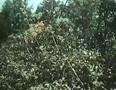 Expedition in die Urzeit (1955)