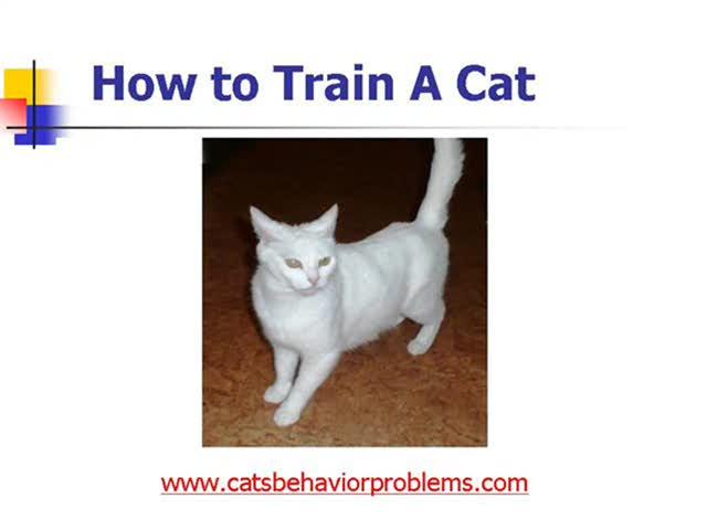 Watch Videos Online Cat Training