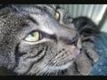 Cutest cat to ever live Adam!