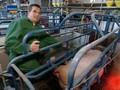 Ware Tier - 2v3 - Auf der Suche nach munteren Kühen und Schweinen