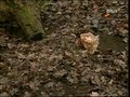 Ware Tier - 1v3 - Auf der Suche nach dem gluecklichen Huhn