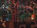 37th Street Christmas Lights