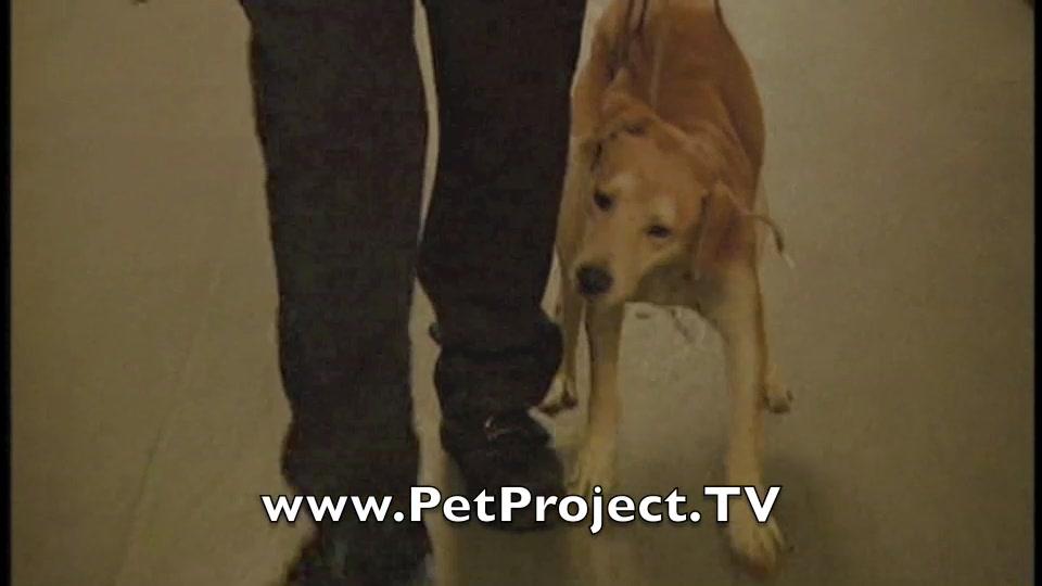 Best Friend Forgotten film - www.PetProject.TV