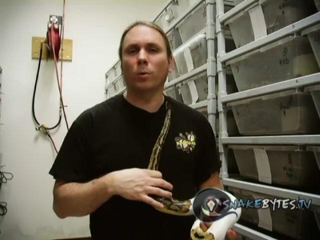 "SnakeBytesTV ""Snake Bites, Puking, 100th Show!"""
