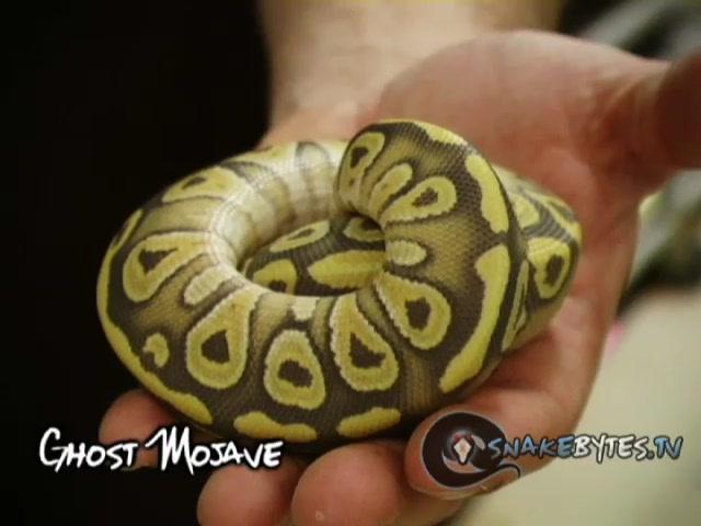 SnakeBytesTV-Haunted