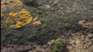 Jungle Fungus - AMAZING