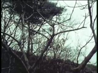 Comet-san ep. 46 raw