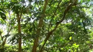 아마존의 눈물-1부 '마지막 원시의 땅'