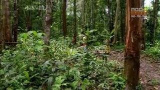 아마존의 눈물-2부 '사라지는 낙원'