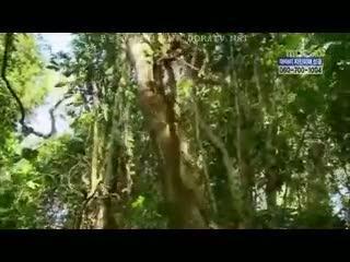 아마존의 눈물 3부