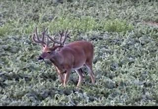 Biggest Deer 2009 ONLY on HawgNSonsTV
