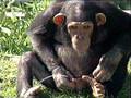 Thirsty Monkey -- gross