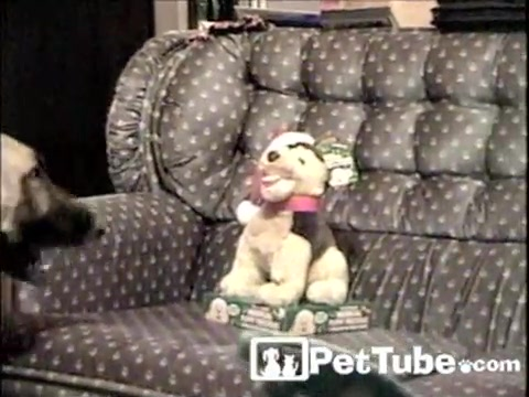 The Caroling Shepherds - PetTube.com
