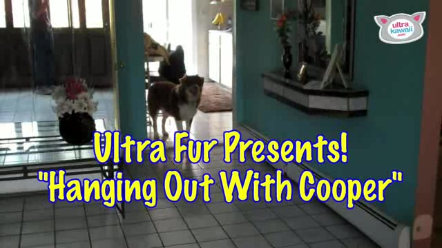 """Hanging Out With Cooper� : Ultra Fur"