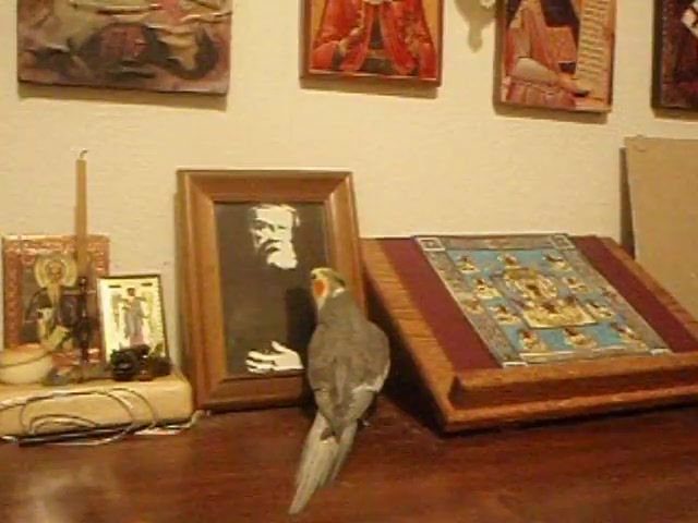 Bird Prayer
