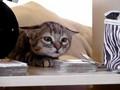 meow she ha