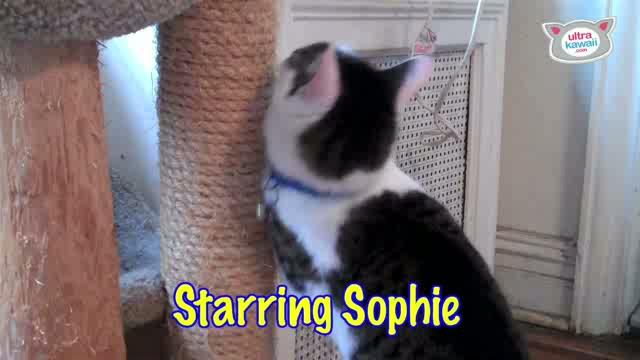 """""""The Sophie 'n Sadie Show�: Ultra Fur"""