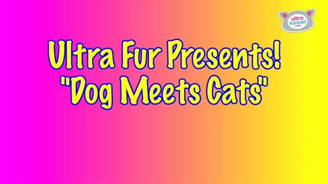 """""""Dog Meets Cats!"""" : Ultra Fur"""