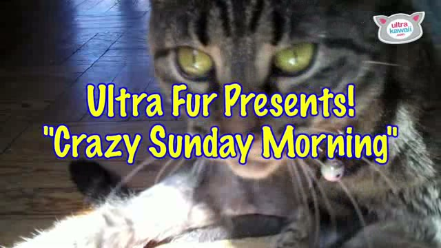 """Crazy Sunday Morning"" : Ultra Fur"
