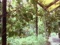 Global Gardener (Bill Mollison, Permaculture) 4 - Urban.avi