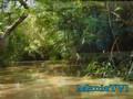 The Pulse News - Amazing Race, Lindsay Lohan, AA, Rainforests
