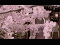 Morning Musume Sakura Gumi - Sakura Mankai