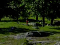 Park orienteering in Uppsala