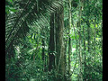 please save the rainforest