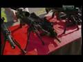 Future Weapons Heckler & Koch's HK416 Assault Rifle (2007)