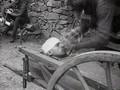 Doku - Der Erste Weltkrieg 02 - Gashölle Ypern