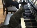 singin' cat