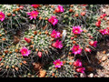 Desert Plants and Flowers