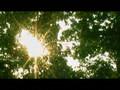 Niall Quinn Under Same Sky music video