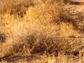 Desert Plants & Cactus