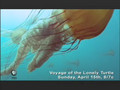 NATURE | VOYAGE OF THE LONELY TURTLE | MONSTER JELLIES | PBS
