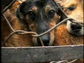 Trent Reznor - China Dog and Cat Fur Farm Investigation