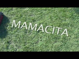 MAMACITA - Handsome Donkey