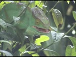 Iguanas, Millipedes and Geckos, Madagascar