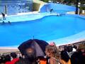 delfini a l'Avana
